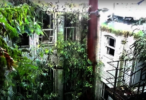 The inner courtyard resembles a jungle